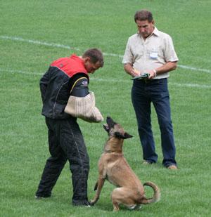 Dog Training Des Plaines