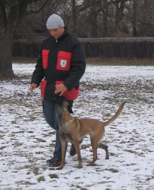 Dog Training Des Plaines